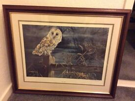 REDUCED - LIMITED SIGNED PRINT OF BARN OWL BY DOROTHEA HYDE