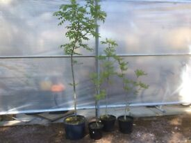 Small trees for sale
