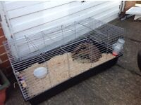 Large indoor rabbit cage , Guinea pigs etc possible free delivery