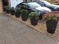 6 Garden pots and Rhodadendrons