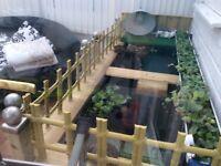 Raised Fish pond