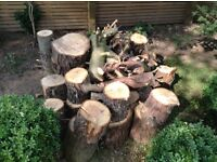 FREE WOOD LOGS FROM TWO 30ft HIGH CONIFER TREES COLLECT COBHAM SURREY