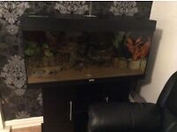 Tropical fish tank set up