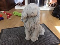 Concrete garden King Charles dog ornament