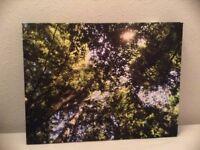 Tree photographic canvas
