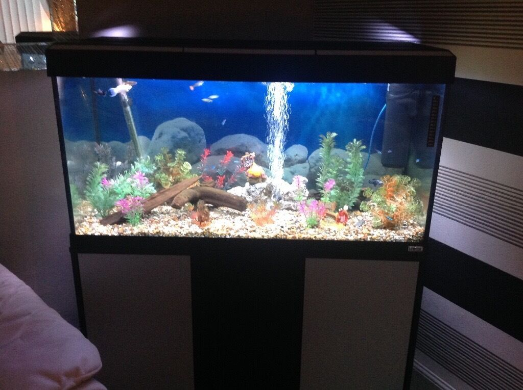 Fluval fish tank and stand full set up open to offers for Fluval fish tank