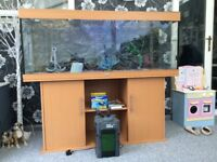 Massive monster 5ft fish tank on stand