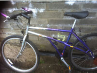 kataylist carrera womens mountain bike have not been used for a couple of years