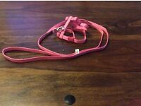 Kitten pink harness and lead with pink bell