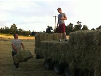 Hay bales - conventional, good quality, weed and rain free, can deliver locally or for collection