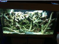 Fish tank juwel 125 marine tank live rock