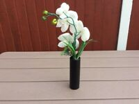 Black Cylindrical Vase with Plant