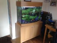 Tropical fishtank bow fronted complete set up with all filters