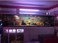 Do you have fish that you do not have the time or has outgrown your tank
