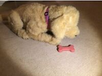 Toy Dog. Fur Real Friends Toy dog. Called Biscuit