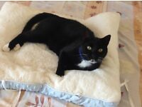 LOST BLACK & WHTE CAT near Eco-Station in BORDON
