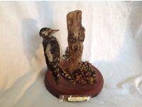 Stuffed woodpecker taxidermy