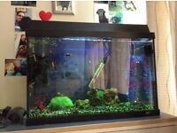 Jewel aquarium 2ft