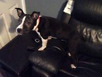 Saffie puppie 5 months