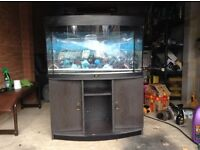 Turtle/fish tank for sale comes with lights filter and heater and the stand in pic