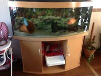 Juwel vision 450 fish tank aquarium