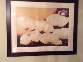 Framed print of golden poppies