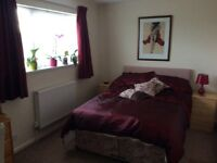 Double room to let in Southway
