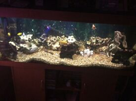 Rio 400 tank with stand and full set up selling due to illness £275 ono