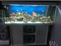 Jewel Rio 400 marine tank