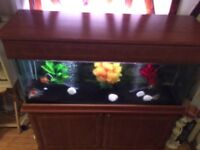4/5ft Fish Tank with all the accessories and fish