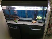 125 litre fish tank and fish