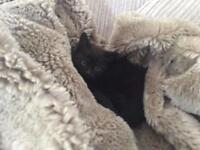 Cuddly little black kitten - fully litter trained - flea & worm treated - ready to go now