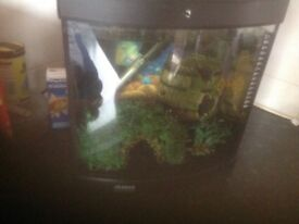 Fish tank kitchen size