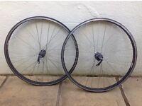 "26"" MTB wheels: Shimano Deore LX M570 hubs on Sun Big Mammoth Fat rims"