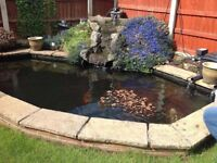 Complete fish pond/waterfall and fish