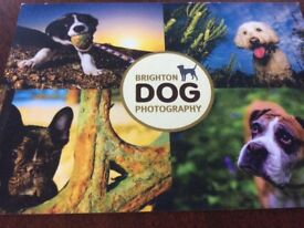 Gift Voucher for 2 Dogs photo session.