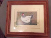 Framed Chicken Print by Irish artist Glenda Rae