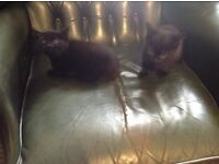 Four gorgeous wee kittens - ready now.