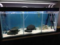 3 section breeding tank