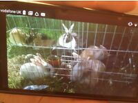 Lost or stolen 8 baby rabbits of,Kingsbury rod erdington