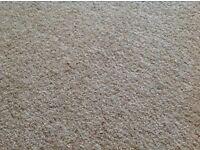 Good Quality Oatmeal Carpet