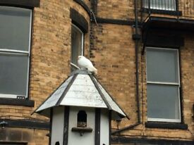 White doves (free to collect)