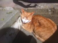 My cat, Fudge, is missing and i miss her alot. Please help, im desperate