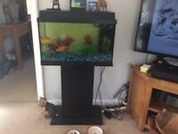 Black wood fish Tank with filter and accessories
