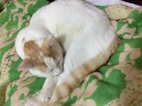 20 month male domestic cat