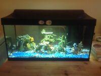 54 Litre Tropical Fish Tank - Complete Set Up