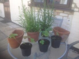 Plants and planters for sale.