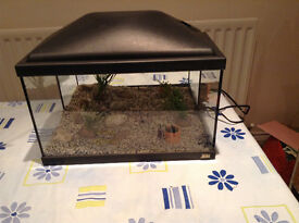 Fishtank Rena coldwater with accessories