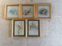 5 FRAMED BIRD PRINTS BY BASIL EDEN