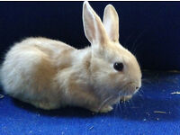 Lovely fluffy baby rabbits for sale